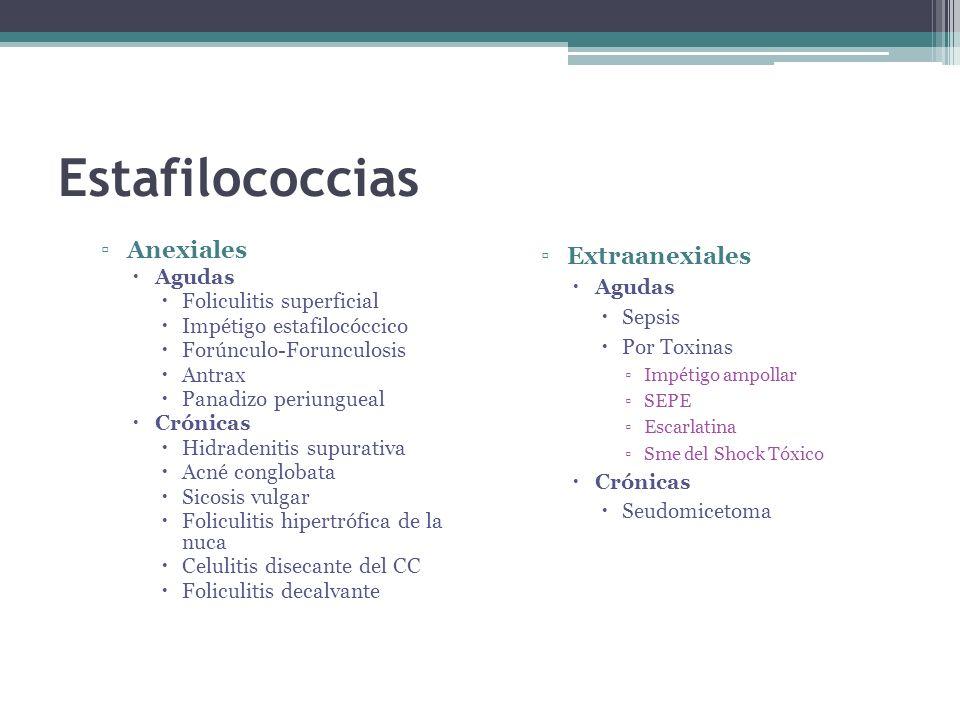 Estafilococcias Anexiales Extraanexiales Agudas Agudas