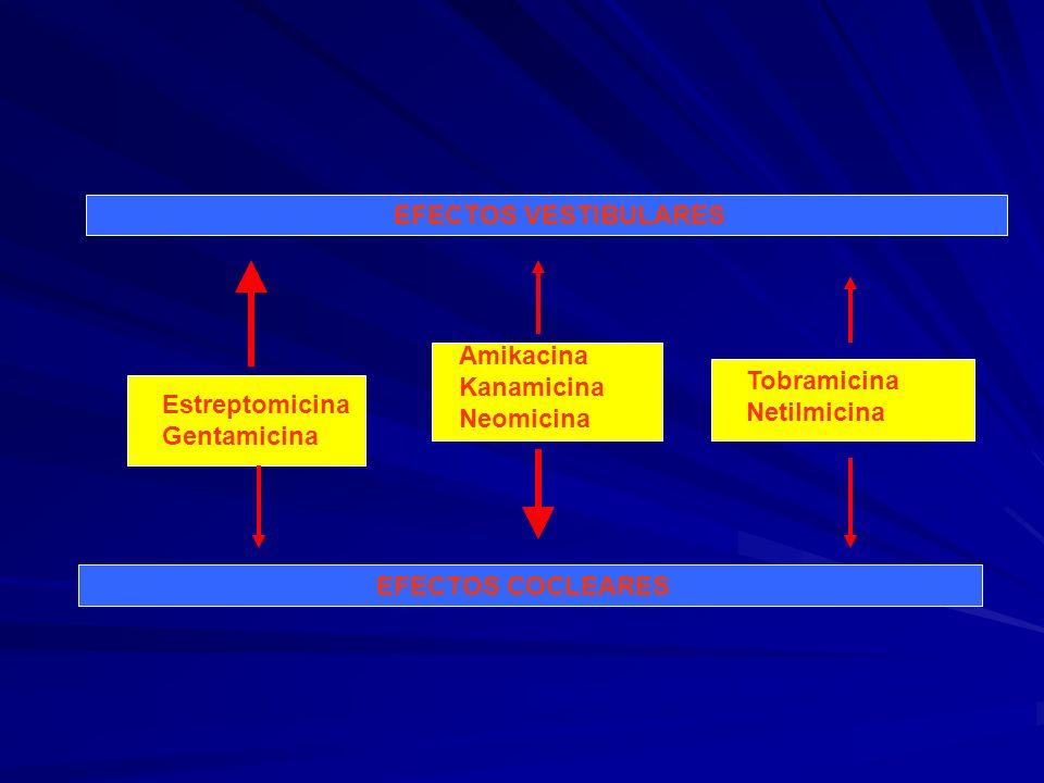 EFECTOS VESTIBULARES Amikacina Kanamicina Neomicina. Tobramicina Netilmicina. Estreptomicina Gentamicina.