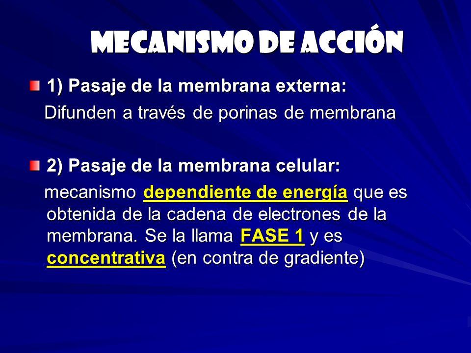 Mecanismo de acción 1) Pasaje de la membrana externa: