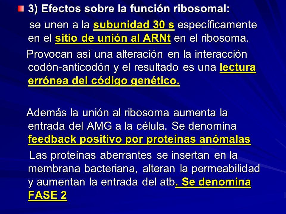 3) Efectos sobre la función ribosomal: