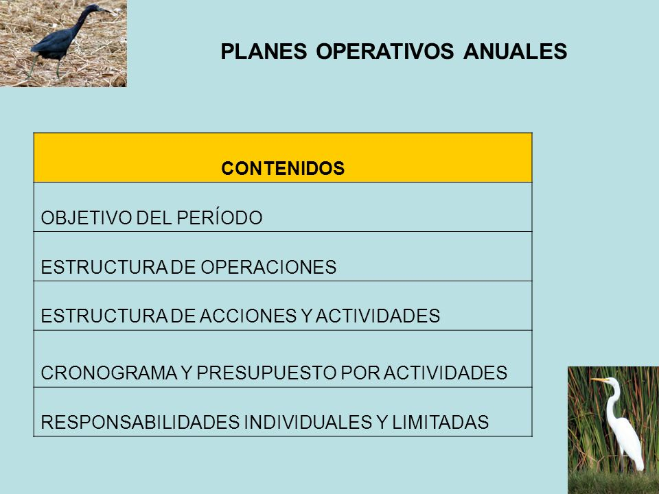 PLANES OPERATIVOS ANUALES