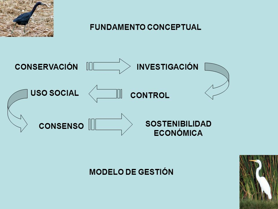 FUNDAMENTO CONCEPTUAL SOSTENIBILIDAD ECONÓMICA