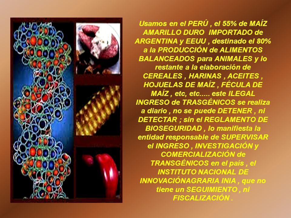 Usamos en el PERÚ , el 55% de MAÍZ AMARILLO DURO IMPORTADO de ARGENTINA y EEUU , destinado el 80% a la PRODUCCIÓN de ALIMENTOS BALANCEADOS para ANIMALES y lo restante a la elaboración de CEREALES , HARINAS , ACEITES , HOJUELAS DE MAÍZ , FÉCULA DE MAÍZ , etc, etc.....