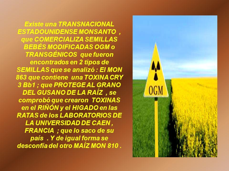 Existe una TRANSNACIONAL ESTADOUNIDENSE MONSANTO , que COMERCIALIZA SEMILLAS BEBÉS MODIFICADAS OGM o TRANSGÉNICOS que fueron encontrados en 2 tipos de SEMILLAS que se analizó : El MON 863 que contiene una TOXINA CRY 3 Bb1 ; que PROTEGE AL GRANO DEL GUSANO DE LA RAÍZ , se comprobó que crearon TOXINAS en el RIÑÓN y el HIGADO en las RATAS de los LABORATORIOS DE LA UNIVERSIDAD DE CAEN , FRANCIA ; que lo saco de su país .