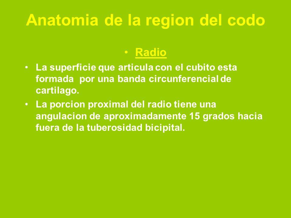 Anatomia de la region del codo