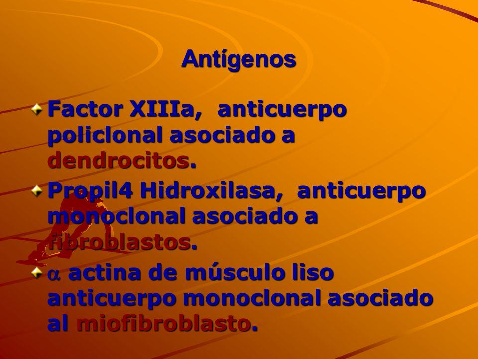 Antígenos Factor XIIIa, anticuerpo policlonal asociado a dendrocitos.