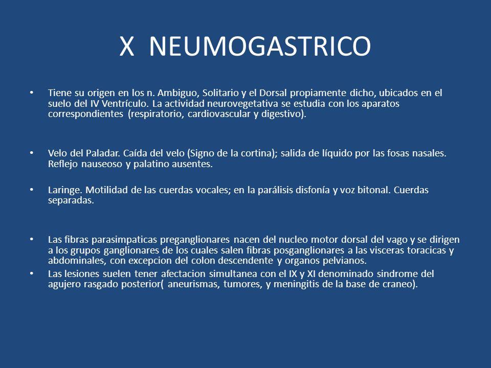 X NEUMOGASTRICO