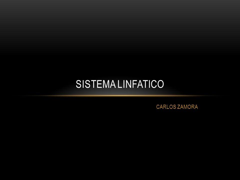 Sistema linfatico CARLOS ZAMORA