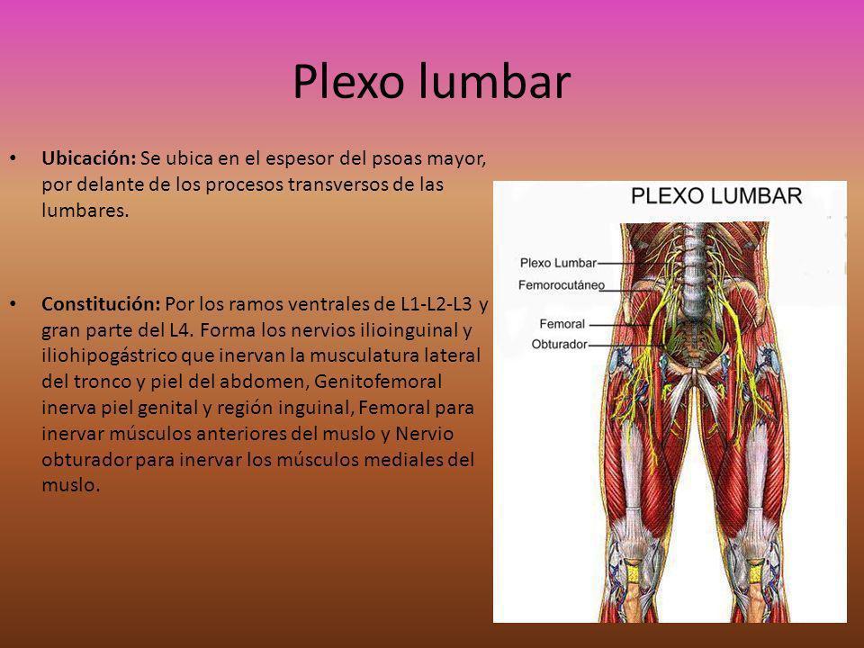 Plexo lumbarUbicación: Se ubica en el espesor del psoas mayor, por delante de los procesos transversos de las lumbares.