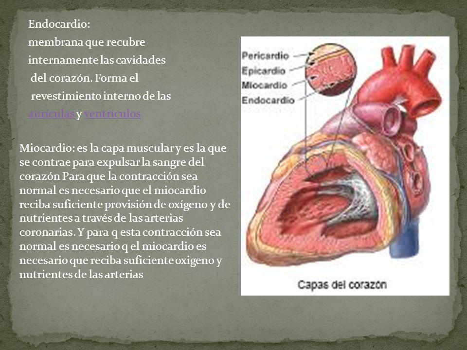 Endocardio: membrana que recubre internamente las cavidades del corazón. Forma el revestimiento interno de las aurículas y ventrículos