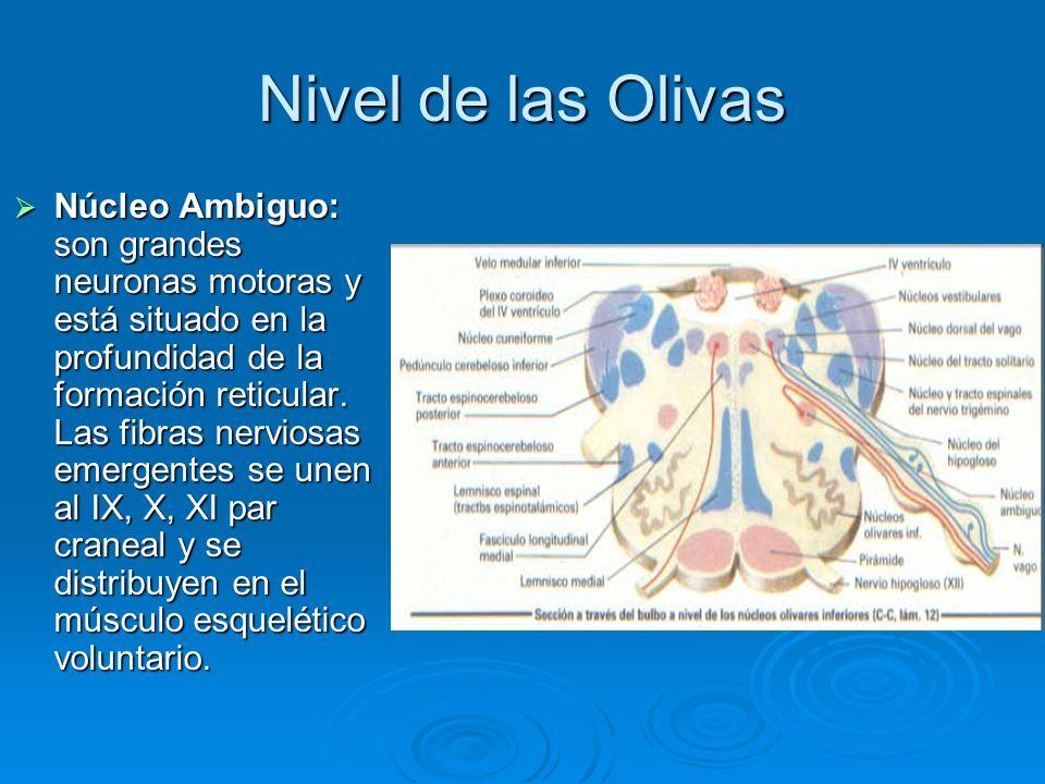 Nivel de las Olivas