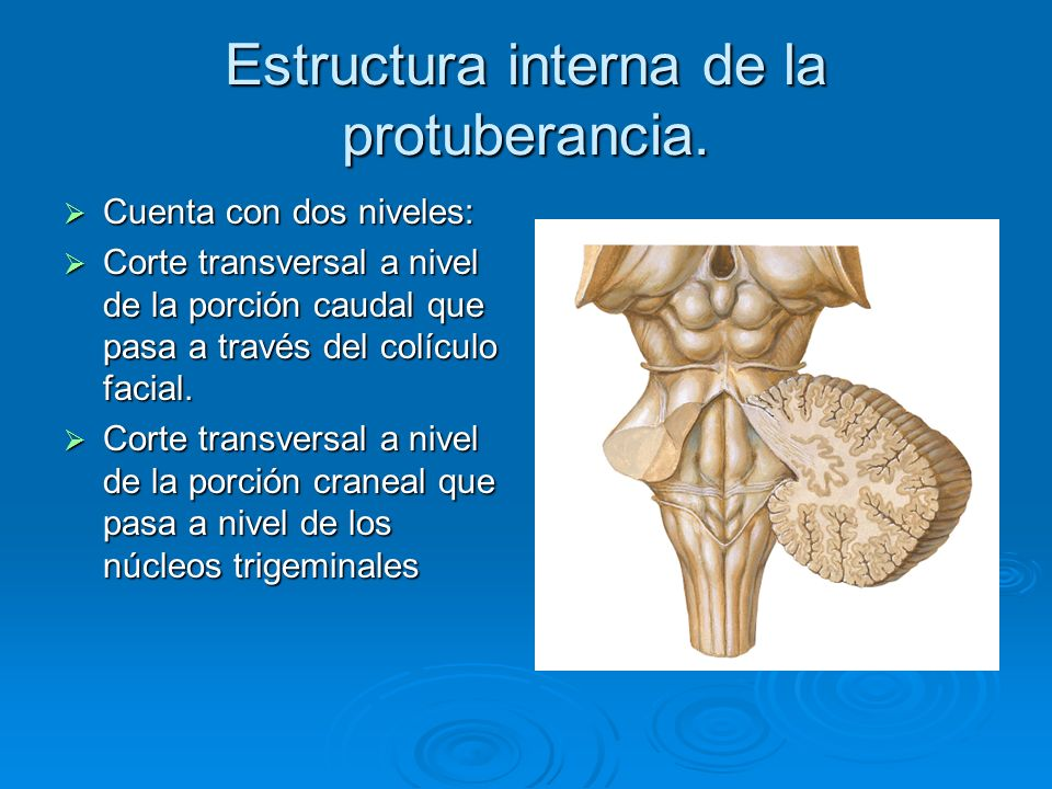 Estructura interna de la protuberancia.