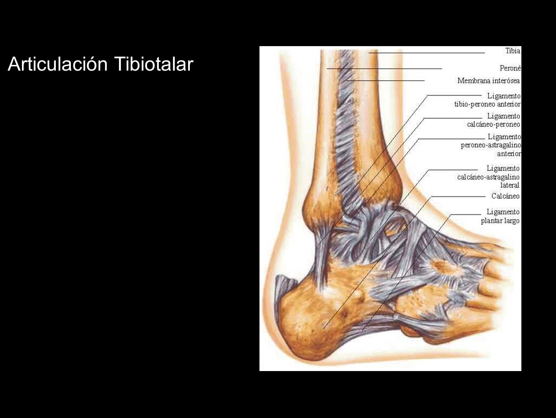 Articulación Tibiotalar
