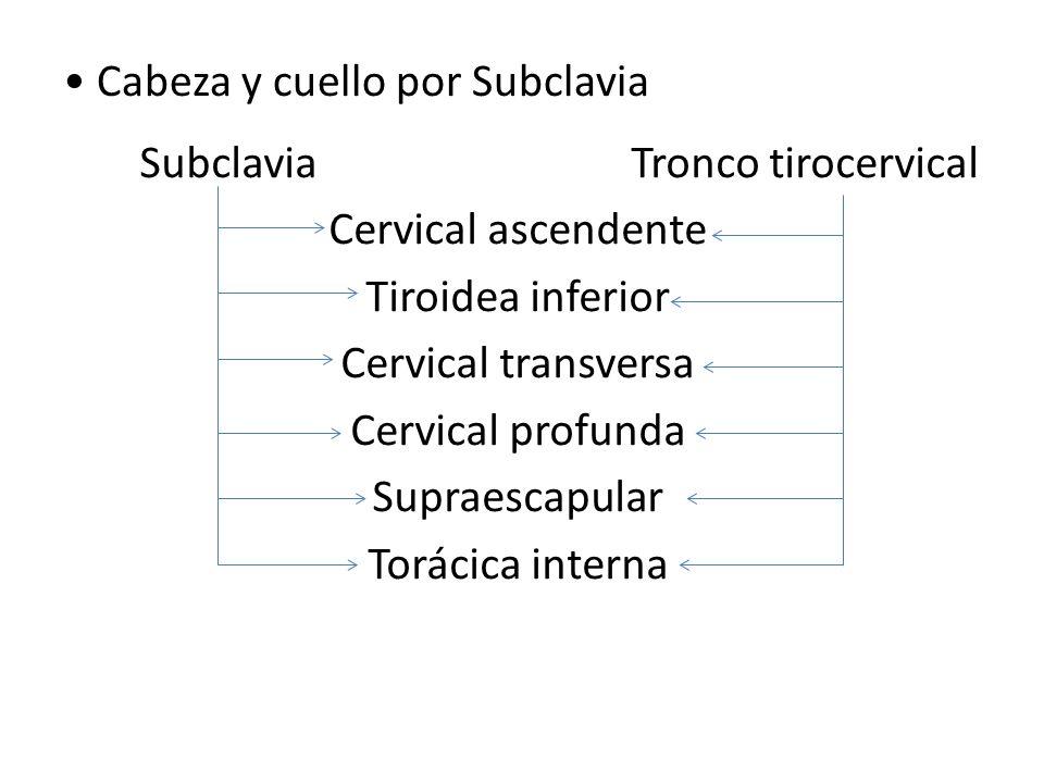 Cabeza y cuello por Subclavia