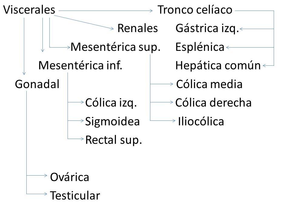 Viscerales Tronco celíaco Renales Gástrica izq. Mesentérica sup