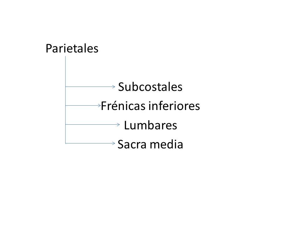 Parietales Subcostales Frénicas inferiores Lumbares Sacra media
