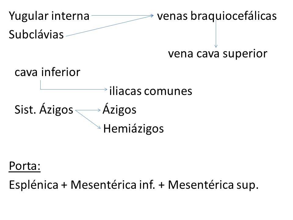 Yugular interna venas braquiocefálicas Subclávias vena cava superior cava inferior iliacas comunes Sist.