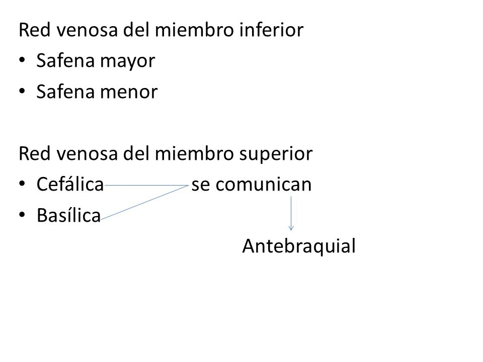 Red venosa del miembro inferior