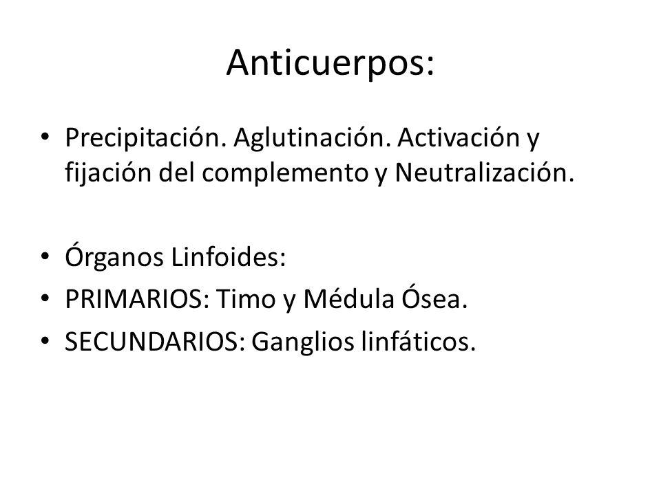 Anticuerpos: Precipitación. Aglutinación. Activación y fijación del complemento y Neutralización. Órganos Linfoides: