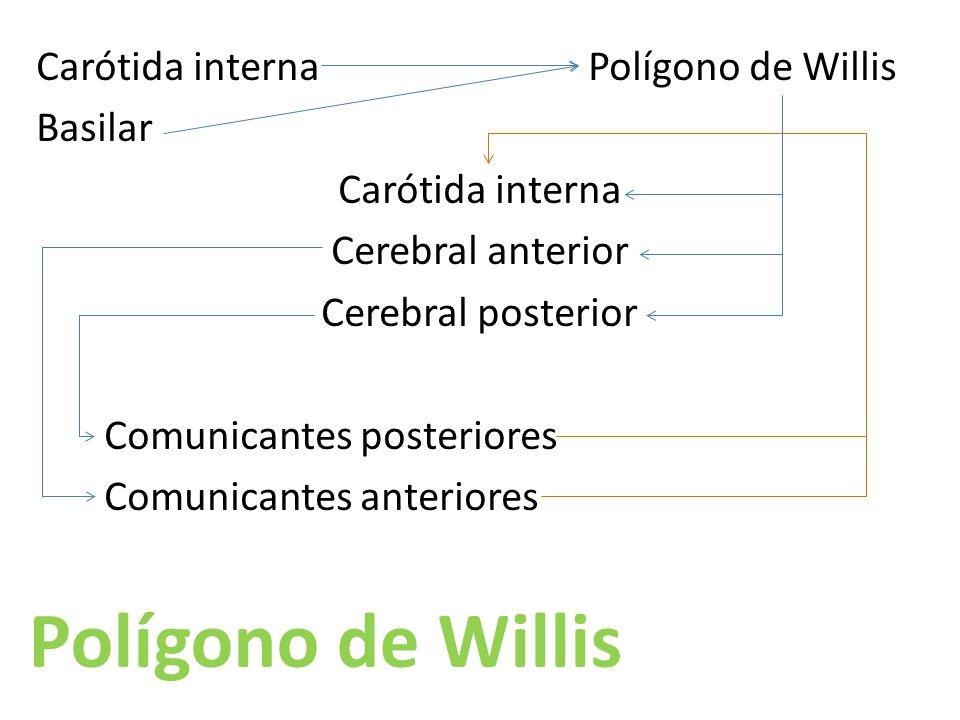 Carótida interna Polígono de Willis Basilar Carótida interna Cerebral anterior Cerebral posterior Comunicantes posteriores Comunicantes anteriores