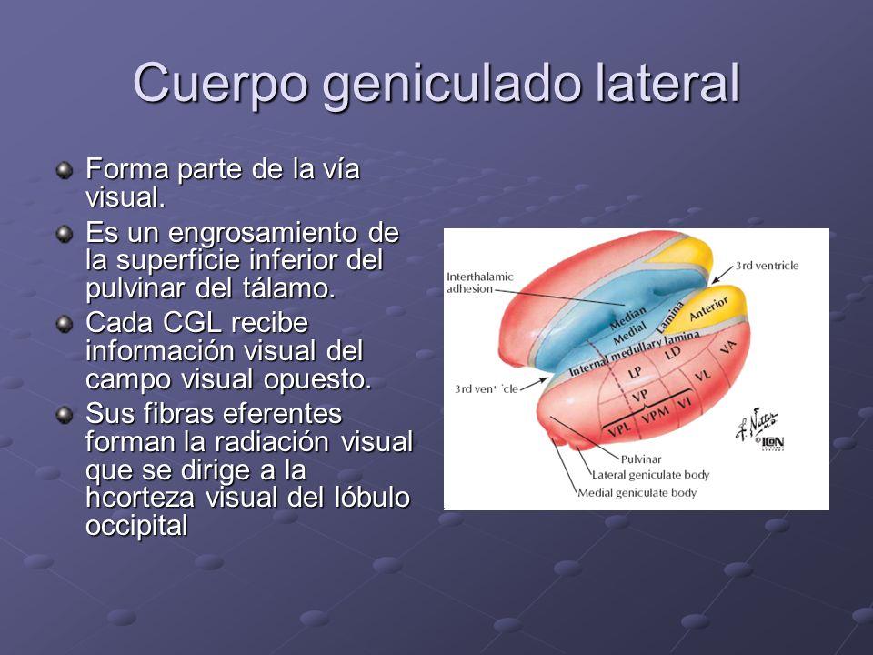 Cuerpo geniculado lateral