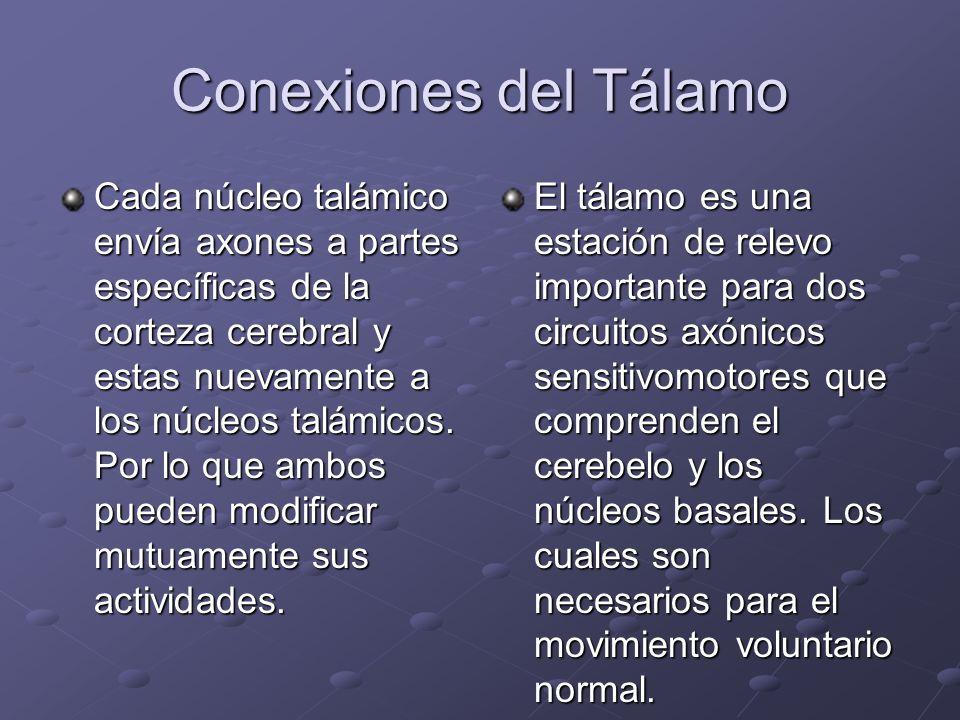 Conexiones del Tálamo