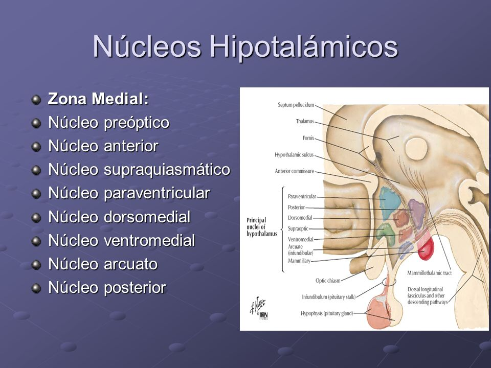 Núcleos Hipotalámicos
