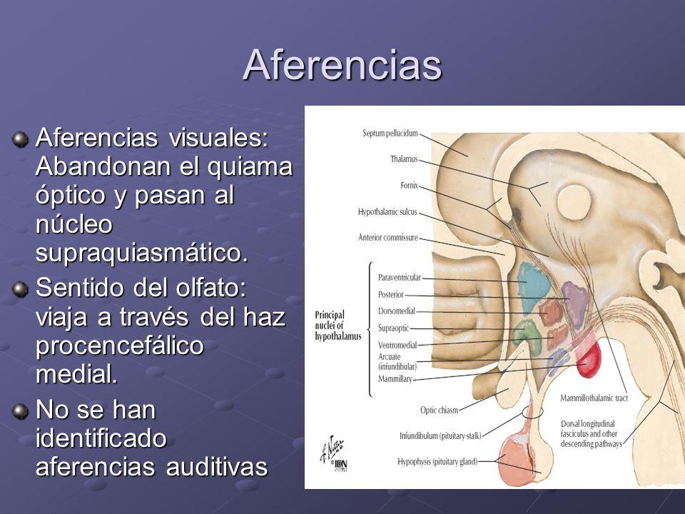 Aferencias Aferencias visuales: Abandonan el quiama óptico y pasan al núcleo supraquiasmático.