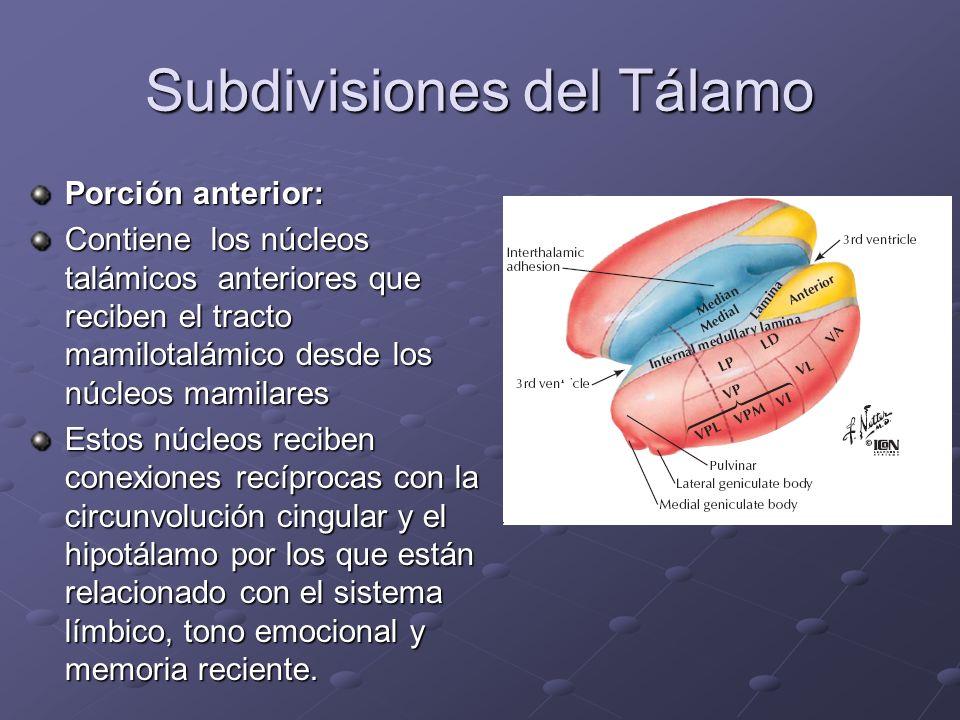Subdivisiones del Tálamo