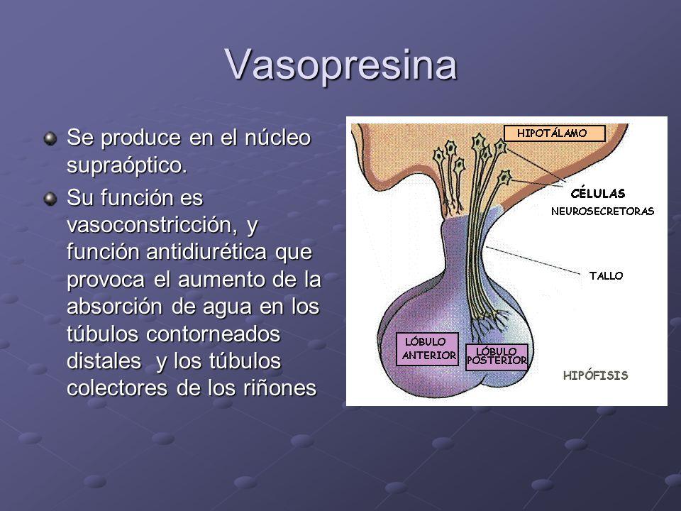 Vasopresina Se produce en el núcleo supraóptico.