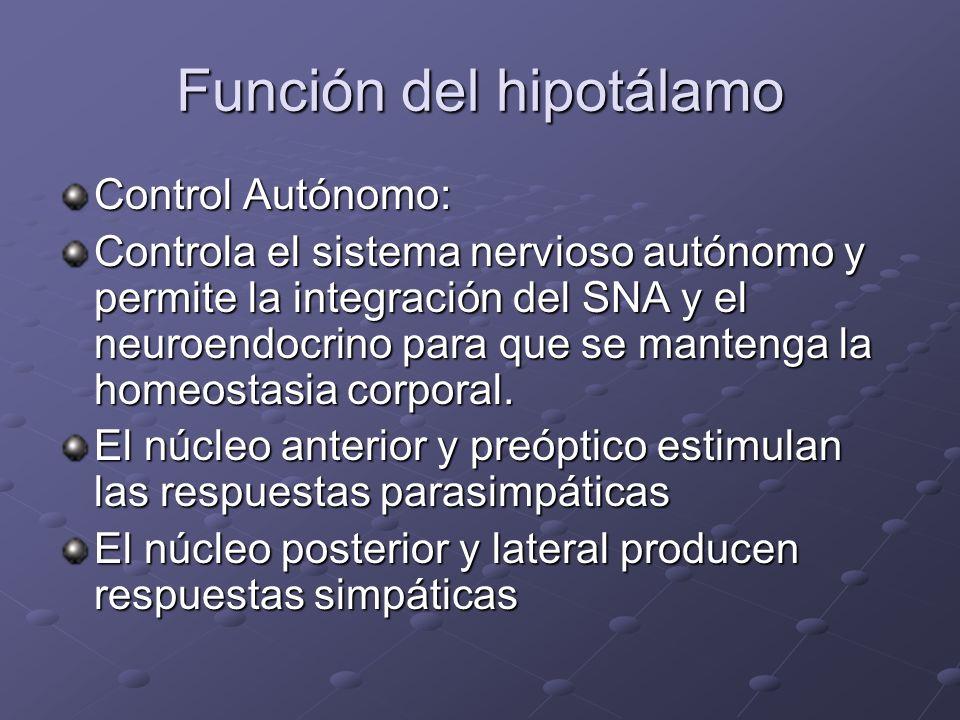 Función del hipotálamo