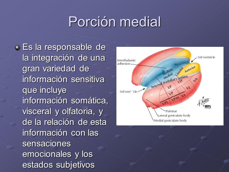 Porción medial