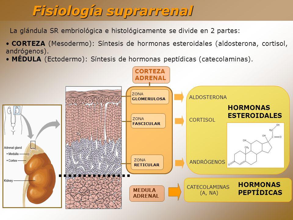 Fisiología suprarrenal