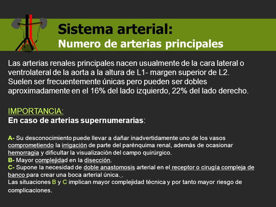 Numero de arterias principales