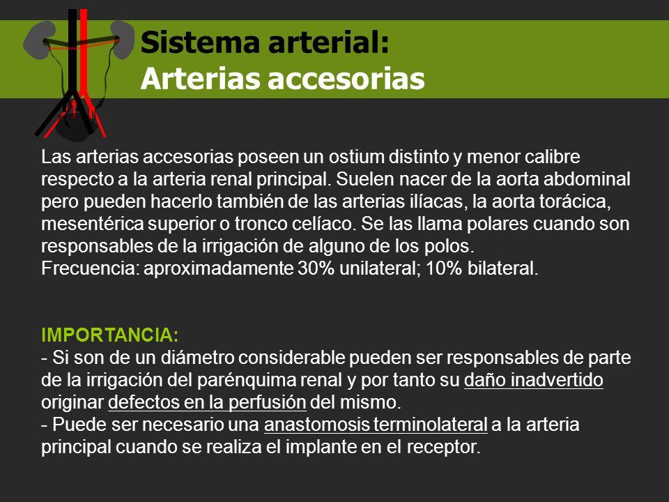 Arterias accesorias Sistema arterial: