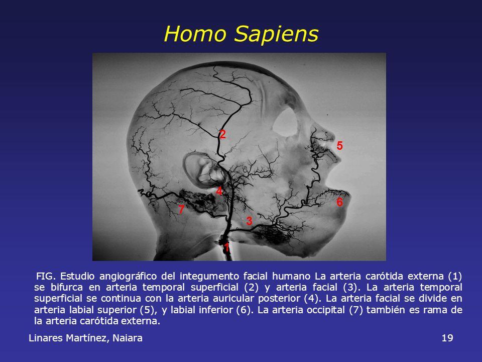 Homo Sapiens 2. 5. 4. 6. 7. 3. 1.
