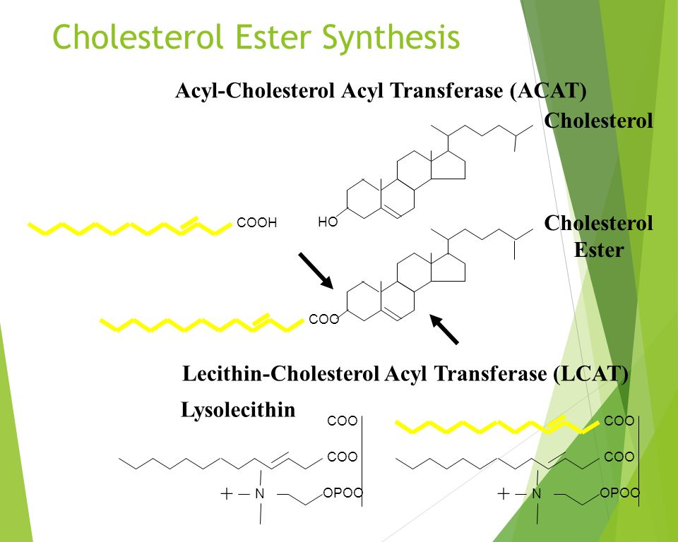 ester sythesis Esterification reaction: the synthesis and purification of 2- alcohol functional group into an ester so that it is less damaging to the digestive system in the human.