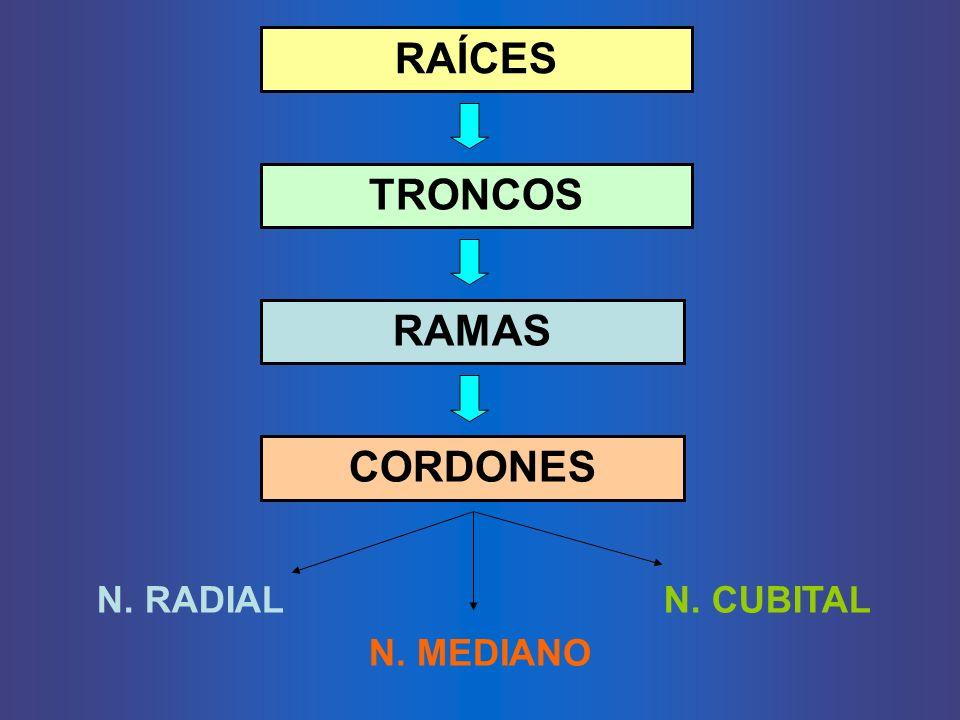 RAÍCES TRONCOS RAMAS CORDONES