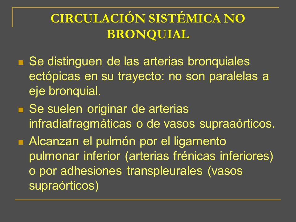 CIRCULACIÓN SISTÉMICA NO BRONQUIAL