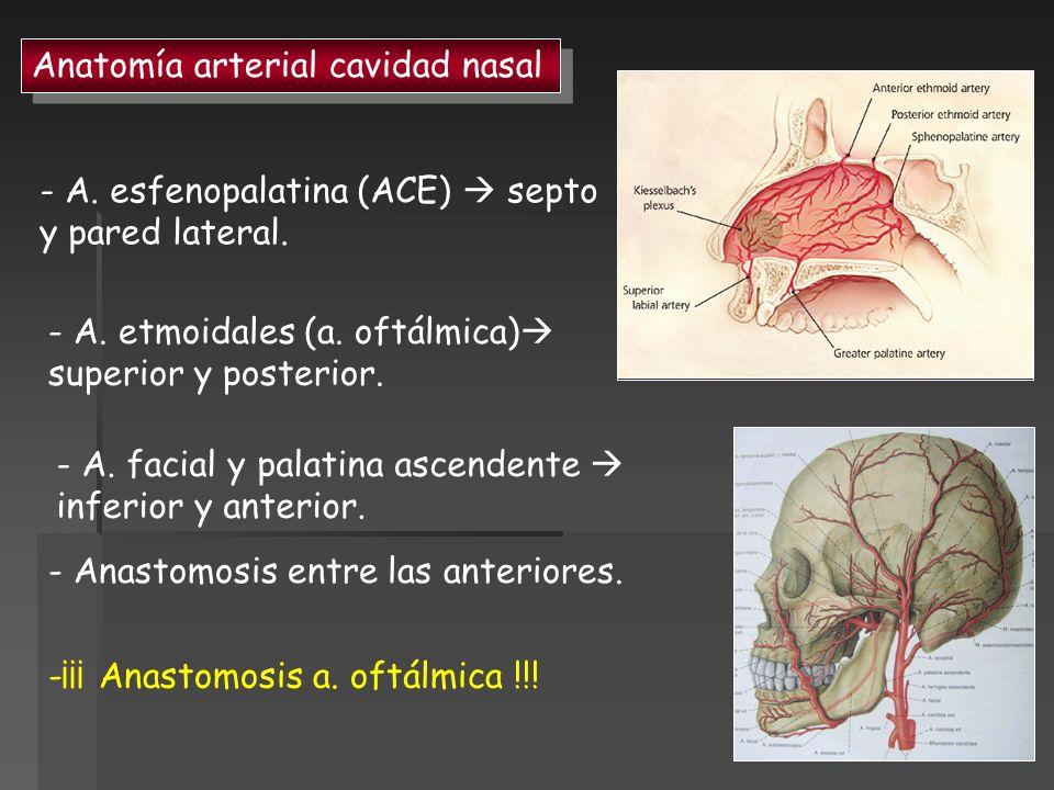 Anatomía arterial cavidad nasal