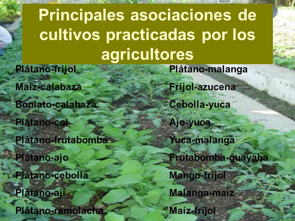 El tema que abordaremos hoy esta relacionado con los Asociaciones de cultivos favorables