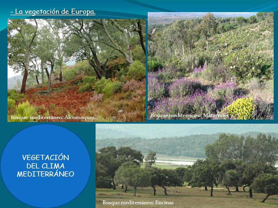 El medio f sico de europa ppt video online descargar for Clima mediterraneo de interior