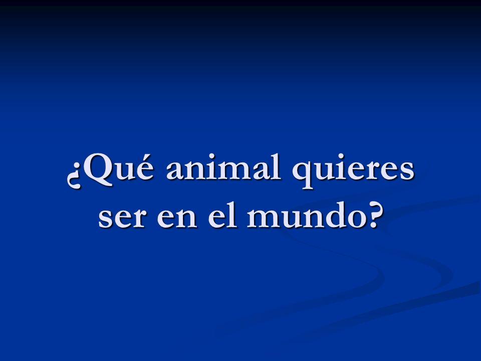 ¿Qué animal quieres ser en el mundo