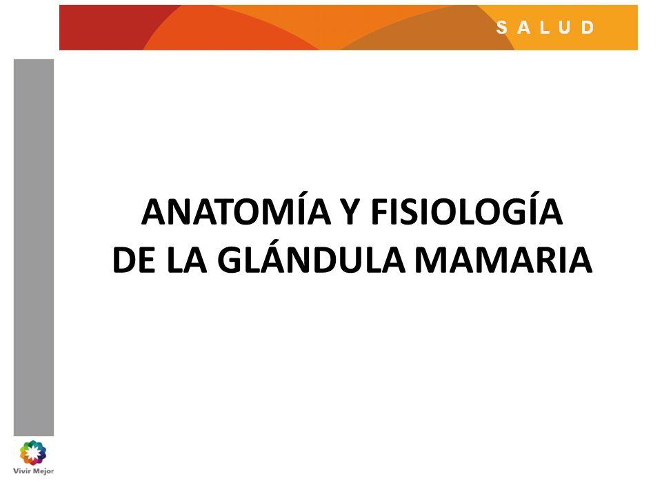 ANATOMÍA Y FISIOLOGÍA DE LA GLÁNDULA MAMARIA - ppt video online ...