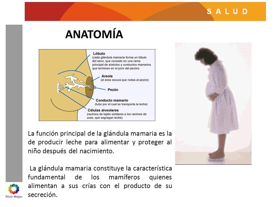 Excelente Anatomía Del Pezón Adorno - Anatomía de Las Imágenesdel ...