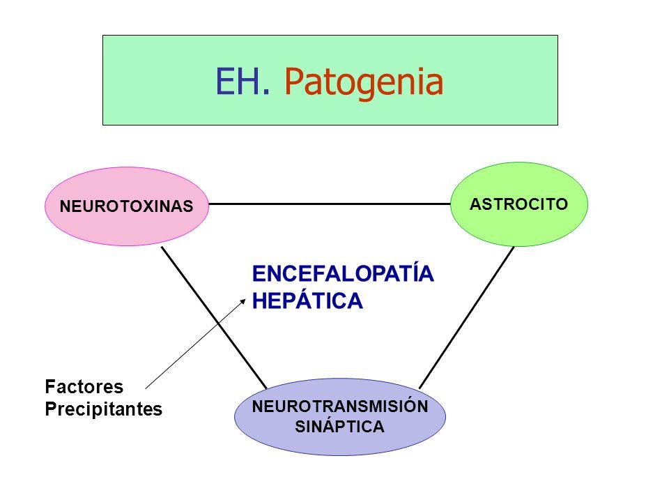 EH. Patogenia ENCEFALOPATÍA HEPÁTICA Factores Precipitantes ASTROCITO