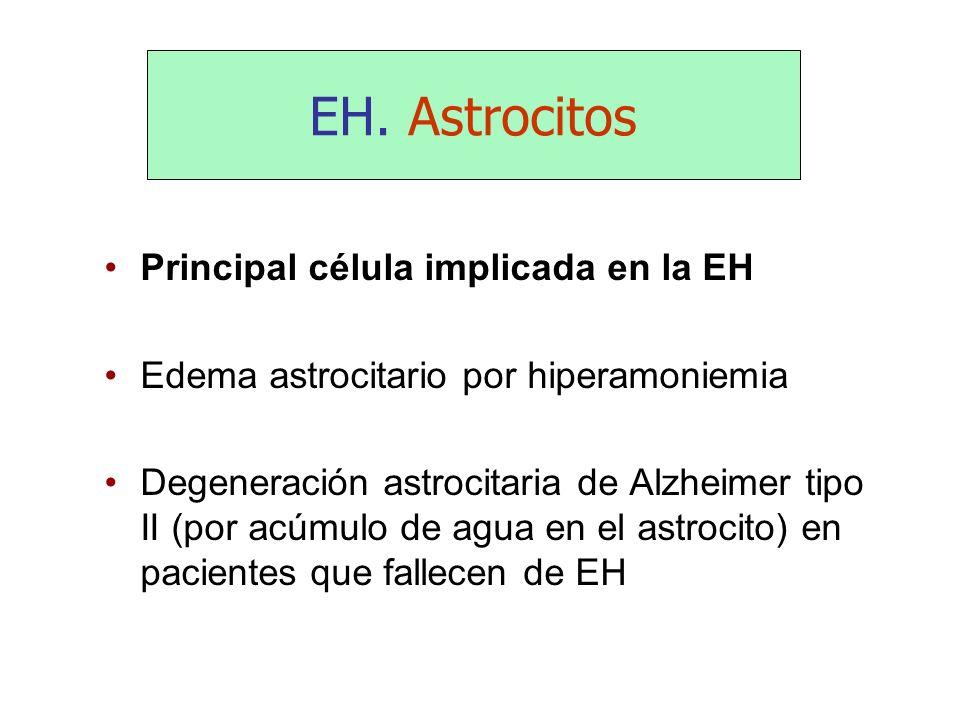 EH. Astrocitos Principal célula implicada en la EH