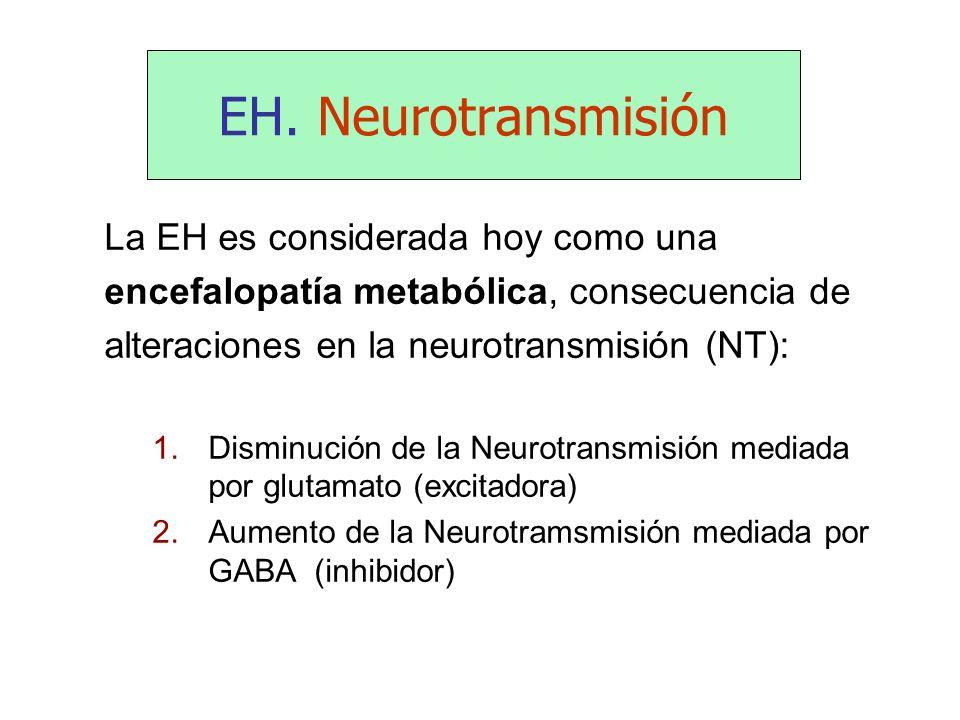 EH. Neurotransmisión La EH es considerada hoy como una