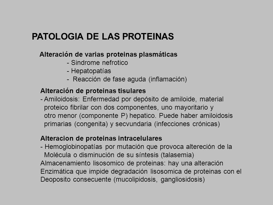 PATOLOGIA DE LAS PROTEINAS
