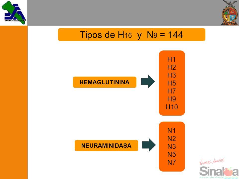 Tipos de H16 y N9 = 144 H1 H2 H3 H5 H7 H9 H10 N1 N2 N3 N5 N7